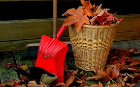 Should You do Deep Cleaning in Autumn